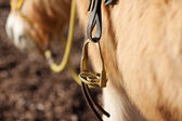 Close-up of a stirrup — Stock Photo