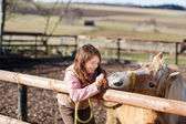 Young girl feeding carrots to a horse — Stock Photo