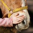 Girl stroking her pony — Stock Photo