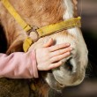 Stock Photo: Girl stroking her pony