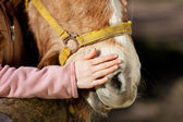 Girl stroking her pony — Stock Photo