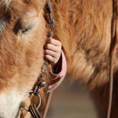 Child hand holding horse reins — Stock Photo