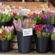 Stock Photo: Tubs of fresh flowers on sale