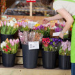 Female Florist With Various Flowers In Shop — Stock Photo