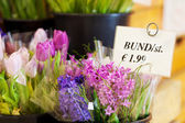 Différentes fleurs avec l'étiquette de prix en magasin — Photo