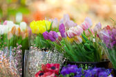 Fresh flowers on sale — Stock Photo