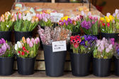 Tubs of fresh flowers on sale — Stock Photo