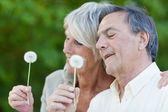 Beautiful happy couple holding dandelions — Stock Photo