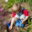 Boy in the vegetable garden — Stockfoto