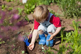 Boy in the vegetable garden — Stock Photo