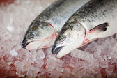 Two salmons lying on ice at store — Stock Photo