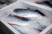 Whole salmons lying in a transportation box — Stock Photo