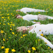 Stock Photo: Family lying on grassy field