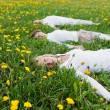 Family lying on grassy field — Stock Photo