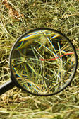 Neddle in the haystack — Stock Photo