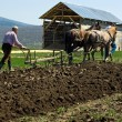 Two men plowing — Stock Photo #26779517