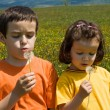 Children blowing dandelion — Stock Photo