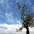 Tree and sky — Stock Photo