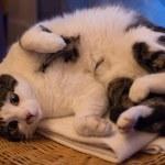 Resting cat — Stock Photo