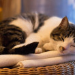 Resting cat — Stock Photo #29714967