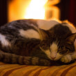 Resting cat — Stock Photo #29715007