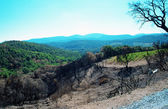 After a forest fires. — Stock Photo