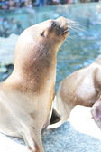A seal. — Stock Photo