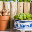 Gardening stuff with vivid colors and blue background — Stock Photo