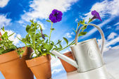 Trucs jardinage avec vive composition rurale — Photo
