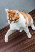 Cute, sweet cat in home — Stock Photo
