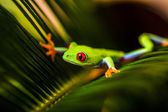 Natural and fresh colorful theme with exotic frog — Stock Photo