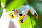 Tropical rain forest theme — Stock Photo