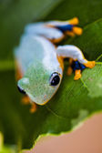 Exotic theme with frog — Stock Photo