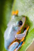 Colorful frog in the jungle — Stock Photo