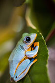 Colorful theme of exotic frog — Stock Photo
