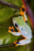 Beautiful natural concept with exotic frog — Stock Photo