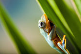 Rain forest, natural environment, exotic frog — Stock Photo