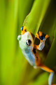 Fresh, beautiful concept of jungle with colorful frog — Stock Photo
