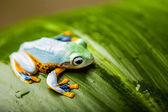 Natural exotic frog — Stock Photo