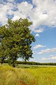 Zomertijd, grasland en velden — Stockfoto