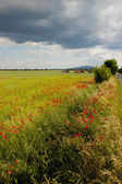 Summer time, grassland and fields — Stock Photo