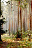Forests od Lower Silesia — Stock Photo