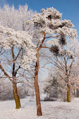 Winter season in Lower Silesia — Stock Photo