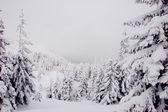 Beautiful mountain landscape, central Europe — Stockfoto
