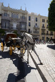 Carriage and horse — Stock Photo