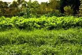 With fresh garden salad — Stock Photo