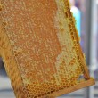 Foto de Stock  : Honey in honeycombs.