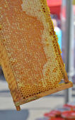 Honey in honeycombs. — Stock Photo