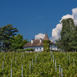 French Vineyard — Stock Photo