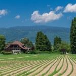 Green field landscape — Stock Photo